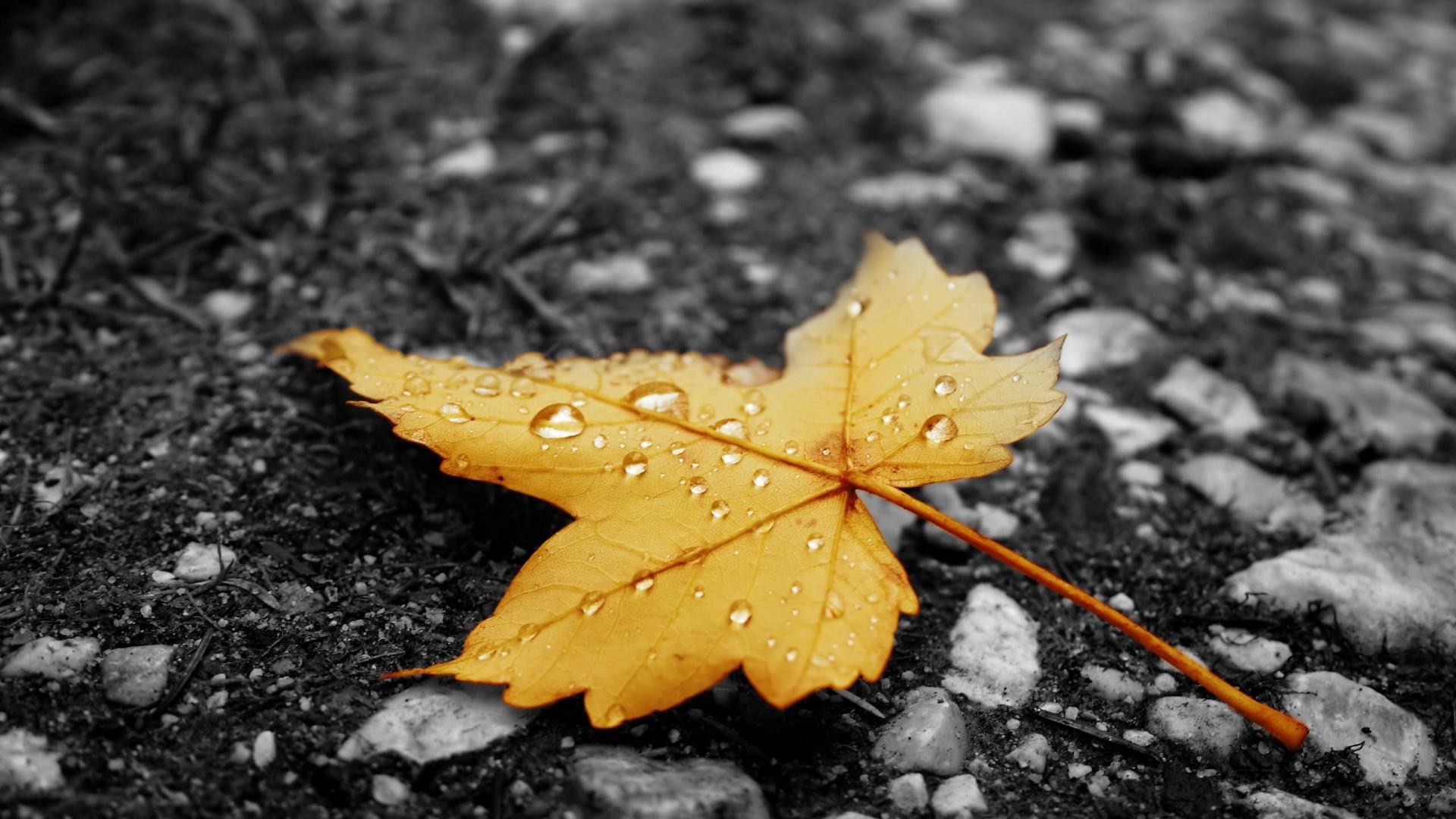 raindrops-on-a-leaf-wallpaper-3.jpg