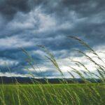 Табиетот на ветрот - Радован Павловски (видео рецитал)