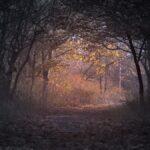 Есента во нас