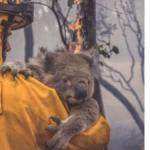 Трогателни илустрации на артисти ширум светот за австралиските пожари