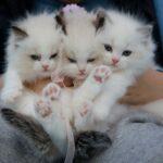 """""""Мачкотерапија"""": 6 причини зошто мачките се мелем за вашето здравје"""