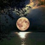 Месечина - Милчо Мисоски