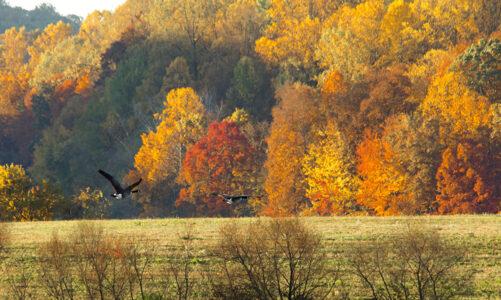 Есенски пејзаж – Димитри Е.Лешниковски