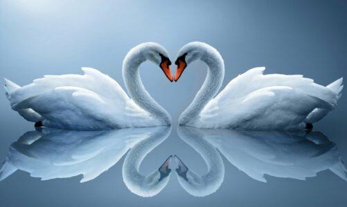"""Љубовта е нешто друго"", видео рецитација од Менче Кадинец"