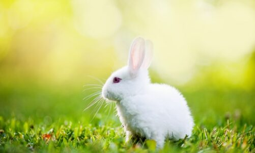Зајчето на Трајче