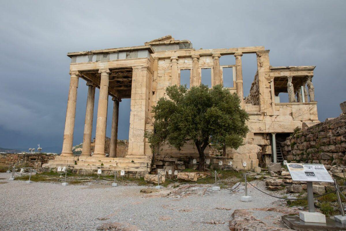 Митот за маслиновото дрво - симбол на мир, мудрост и просперитет