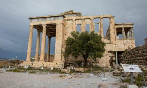Митот за маслиновото дрво – симбол на мир, мудрост и просперитет