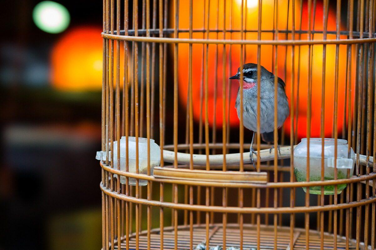 Во кафезот имаше питома птица - Рабиндранат Тагоре