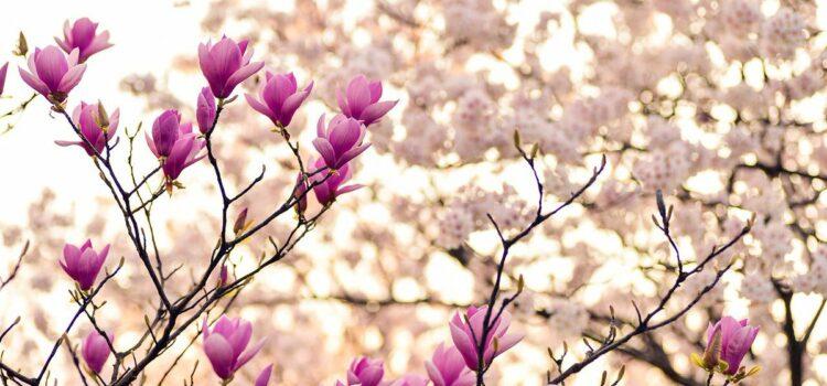Мисли за пролетта која е на самиот праг