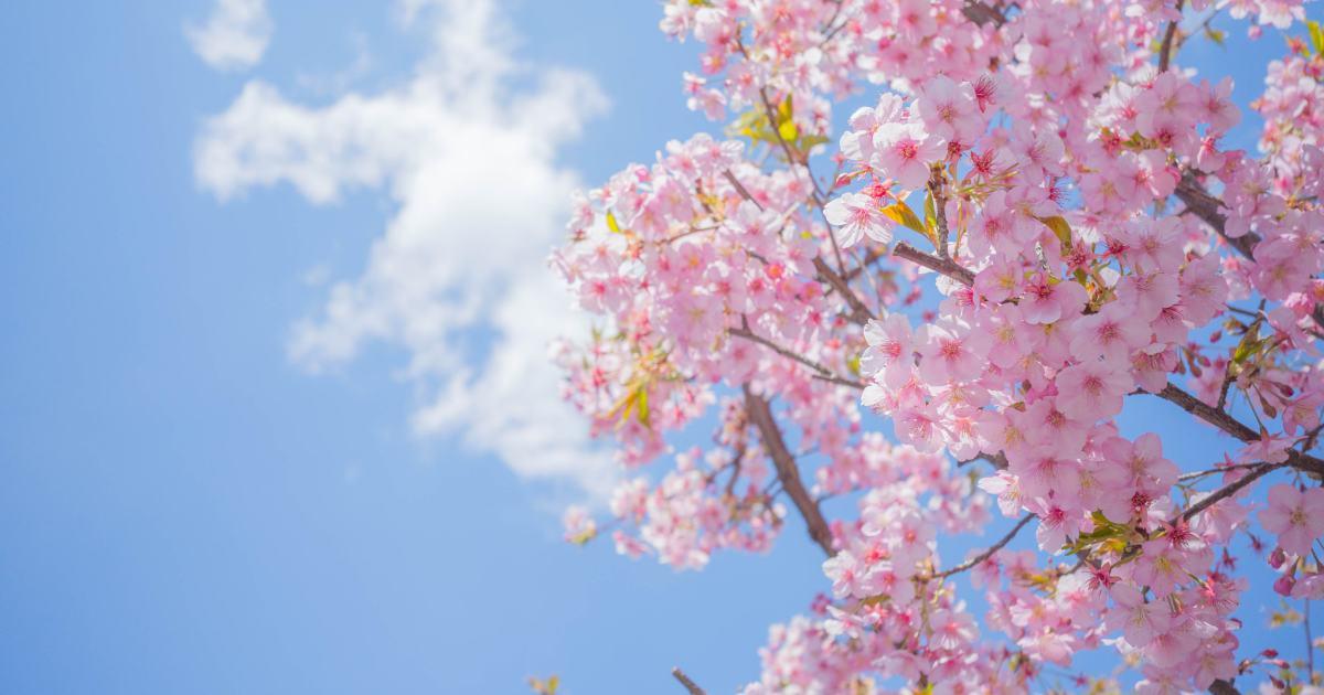 Пролетни зраци - Видое Подгорец