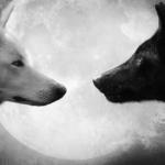Два волка - Индијанска легенда